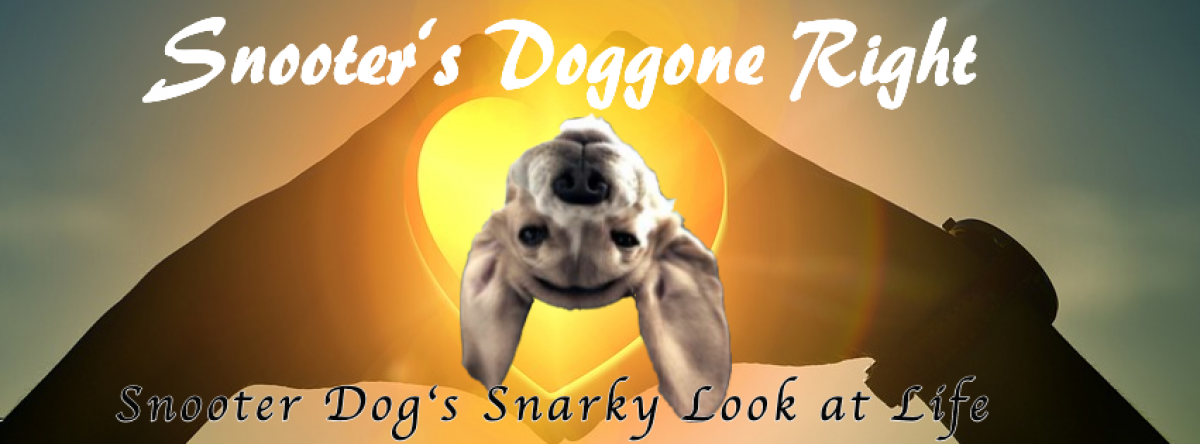 Snooter's Doggone Right